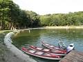 Rybník v lete