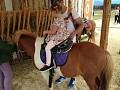 Jazda na koníkoch
