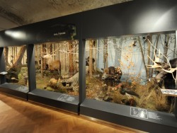 Slovenské múzeum ochrany prírody a jaskyniarstva - Liptovský Mikuláš