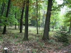 Arborétum - Kysihýbel