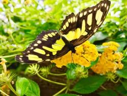 Motýlia záhrada Liptovský Mikuláš